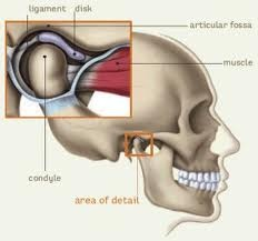 Temporomandibular Joint. Physical Therapy 01