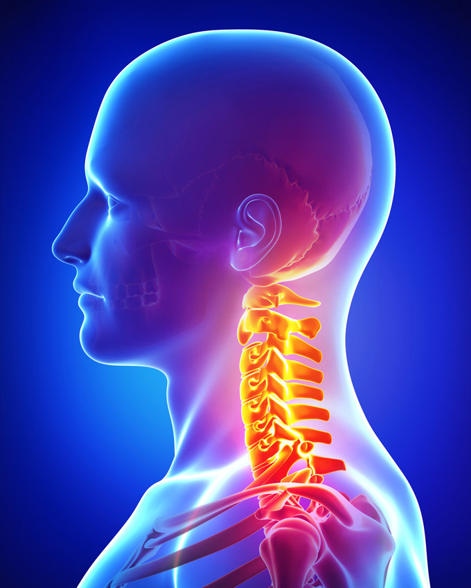 neck-vertebrae-physical-therapy