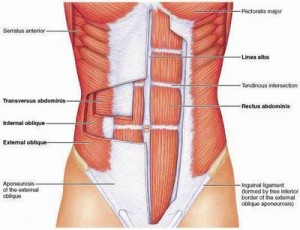 how to get oblique muscles